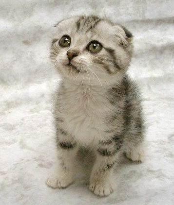 http://to55er.files.wordpress.com/2009/10/cute-cat.jpg